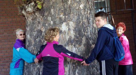 Makó védett fái kerékpártúra